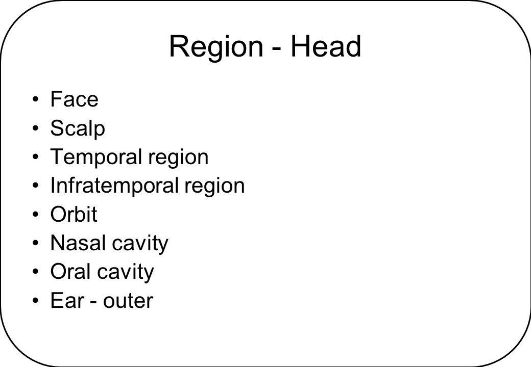Region - Neck Suprahyoid, infrahyoid Triangles – anterior & posterior Pharynx Larynx Carotid sheath