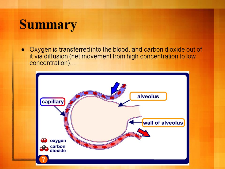 Summary Oxygen is transferred into the blood, and carbon dioxide out of it via diffusion (net movement from high concentration to low concentration)…