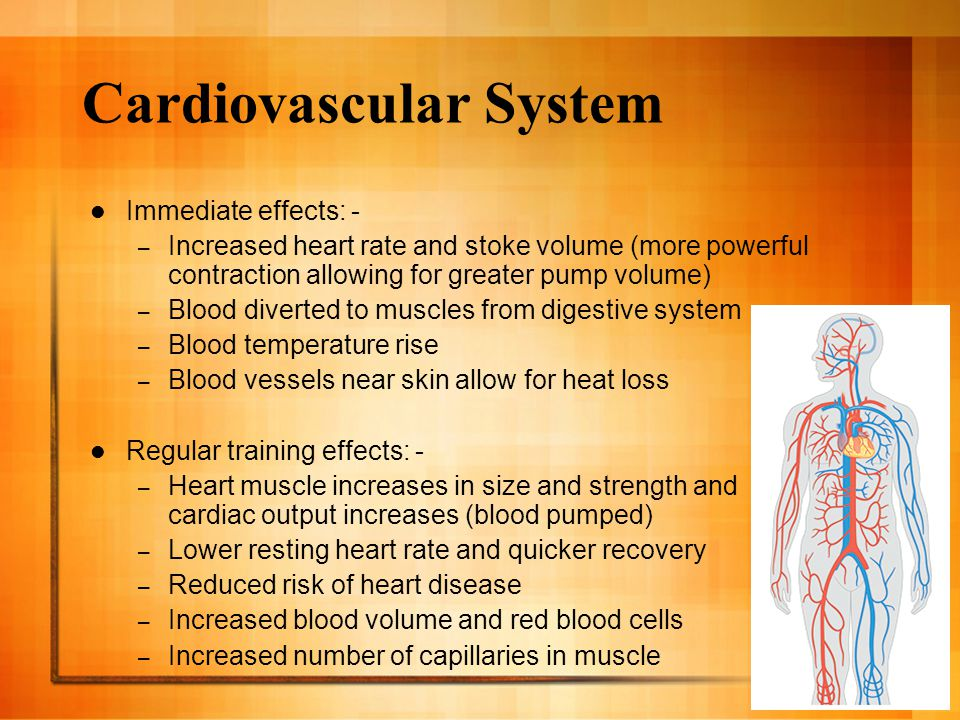 Cardiovascular System Immediate effects: - – Increased heart rate and stoke volume (more powerful contraction allowing for greater pump volume) – Blood diverted to muscles from digestive system – Blood temperature rise – Blood vessels near skin allow for heat loss Regular training effects: - – Heart muscle increases in size and strength and cardiac output increases (blood pumped) – Lower resting heart rate and quicker recovery – Reduced risk of heart disease – Increased blood volume and red blood cells – Increased number of capillaries in muscle