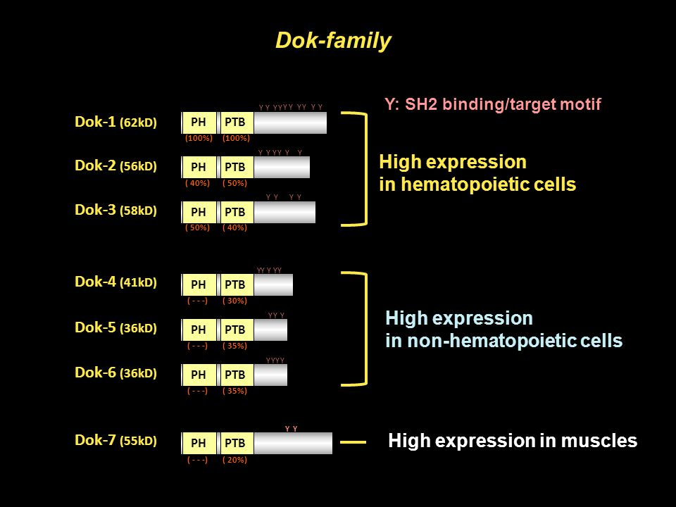 High expression in hematopoietic cells High expression in non-hematopoietic cells Dok-family High expression in muscles Y: SH2 binding/target motif PH
