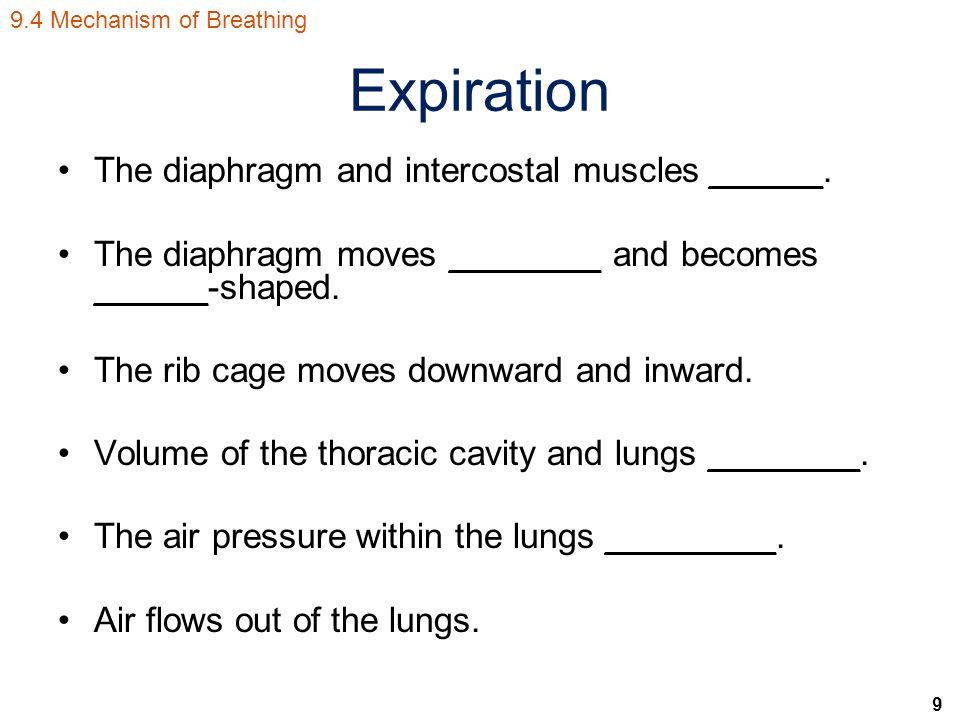 9 Expiration The diaphragm and intercostal muscles ______.