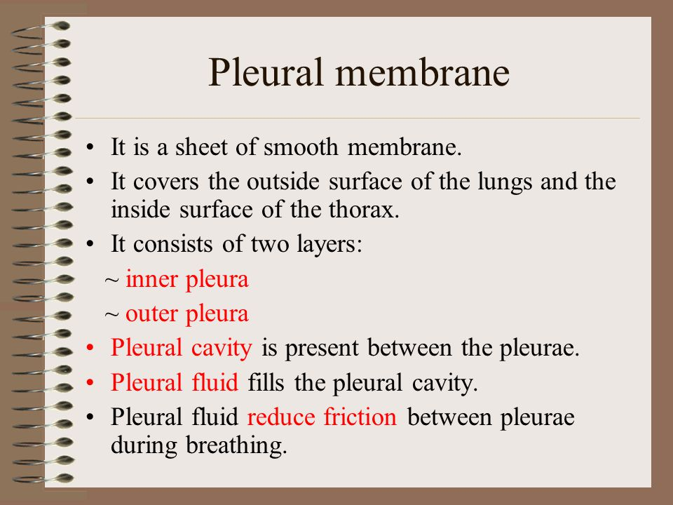 Pleural membrane It is a sheet of smooth membrane. It covers the outside surface of the lungs and the inside surface of the thorax. It consists of two