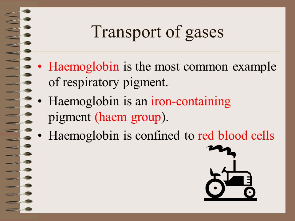 Transport of gases Haemoglobin is the most common example of respiratory pigment. Haemoglobin is an iron-containing pigment (haem group). Haemoglobin