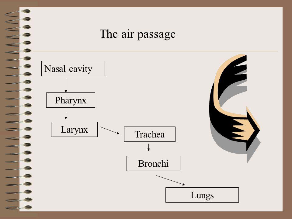 The air passage Nasal cavity Pharynx Larynx Trachea Bronchi Lungs