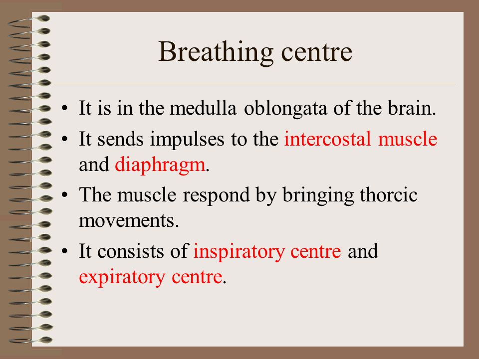 Breathing centre It is in the medulla oblongata of the brain. It sends impulses to the intercostal muscle and diaphragm. The muscle respond by bringin