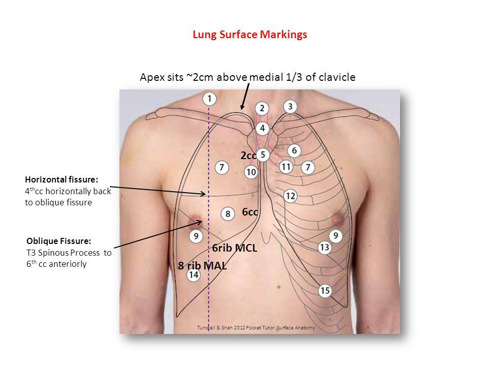 Tunstall & Shah 2012 Pocket Tutor: Surface Anatomy 8 rib MCL 10 rib MAL 6cc Pleural Markings Marks the point of reflection of parietal pleura from the thoracic wall.