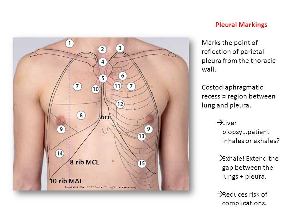 Trachea originates at what vertebral level.