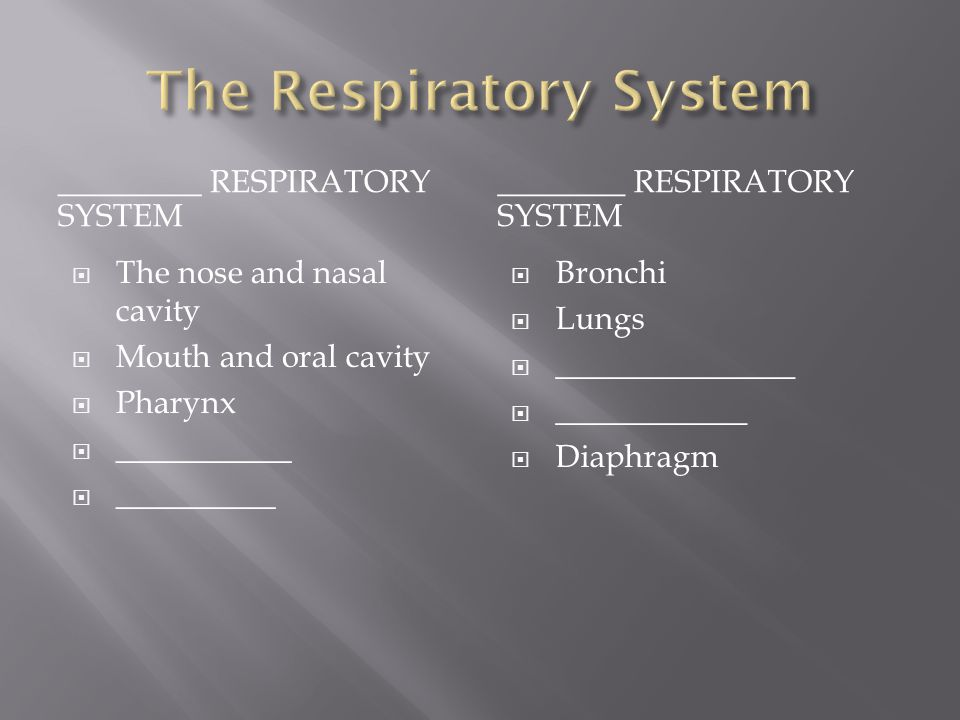 _________ RESPIRATORY SYSTEM ________ RESPIRATORY SYSTEM  The nose and nasal cavity  Mouth and oral cavity  Pharynx  ___________  __________ BBronchi LLungs ________________ _____________ DDiaphragm