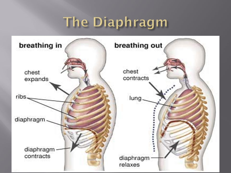  When ___________, the diaphragm _________ and creates ________ pressure within the lungs  Air will always move from an area of ________ pressure, to an area of __________ pressure  Because of the low pressure within the lungs, air ________________.
