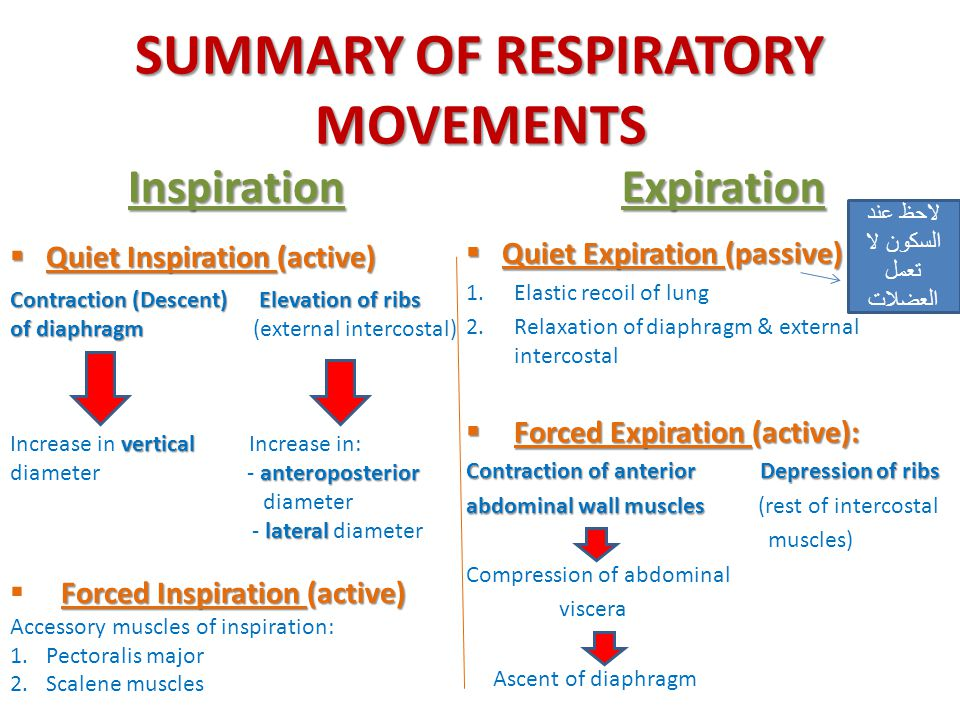SUMMARY OF RESPIRATORY MOVEMENTS Inspiration  Quiet Inspiration (active) Expiration  Quiet Expiration (passive) 1.Elastic recoil of lung 2.Relaxatio