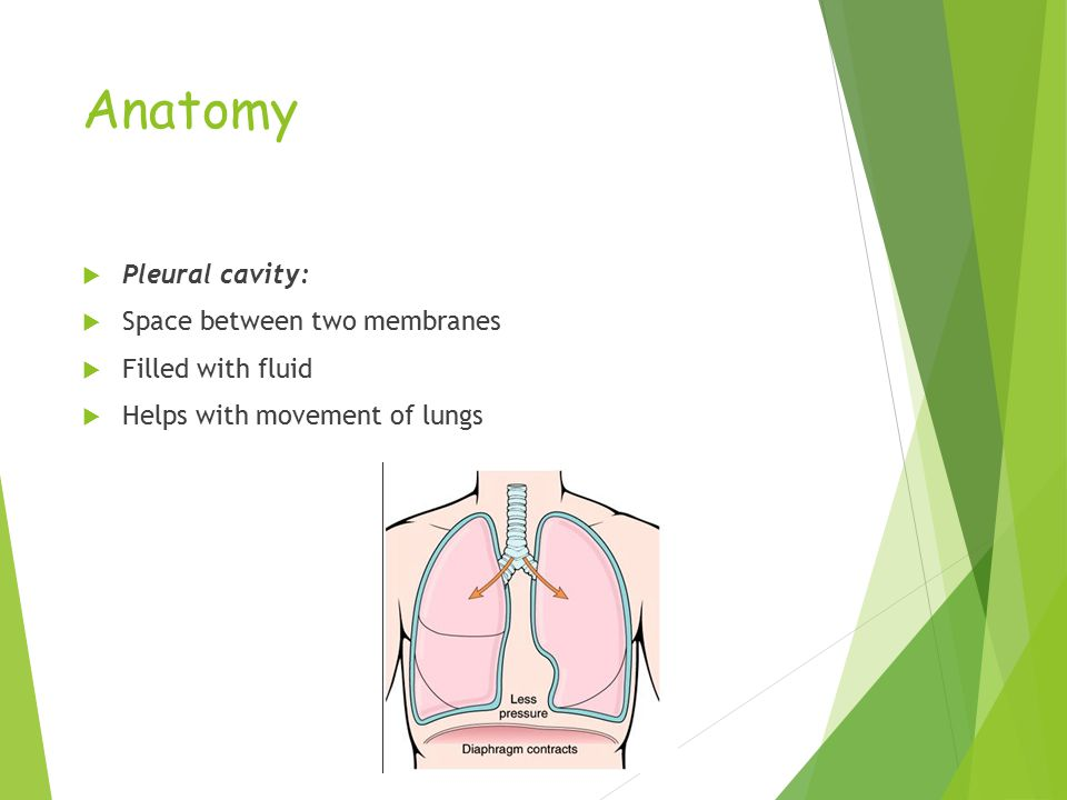 Anatomy  Pleural cavity:  Space between two membranes  Filled with fluid  Helps with movement of lungs