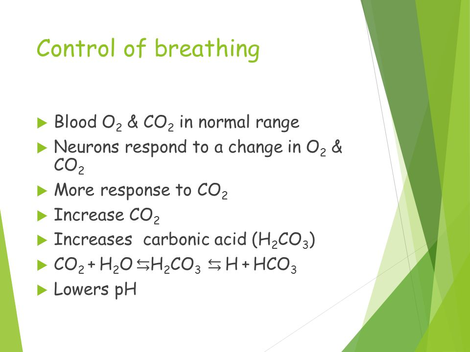Control of breathing  Blood O 2 & CO 2 in normal range  Neurons respond to a change in O 2 & CO 2  More response to CO 2  Increase CO 2  Increases carbonic acid (H 2 CO 3 )  CO 2 + H 2 O ⇆ H 2 CO 3 ⇆ H + HCO 3  Lowers pH