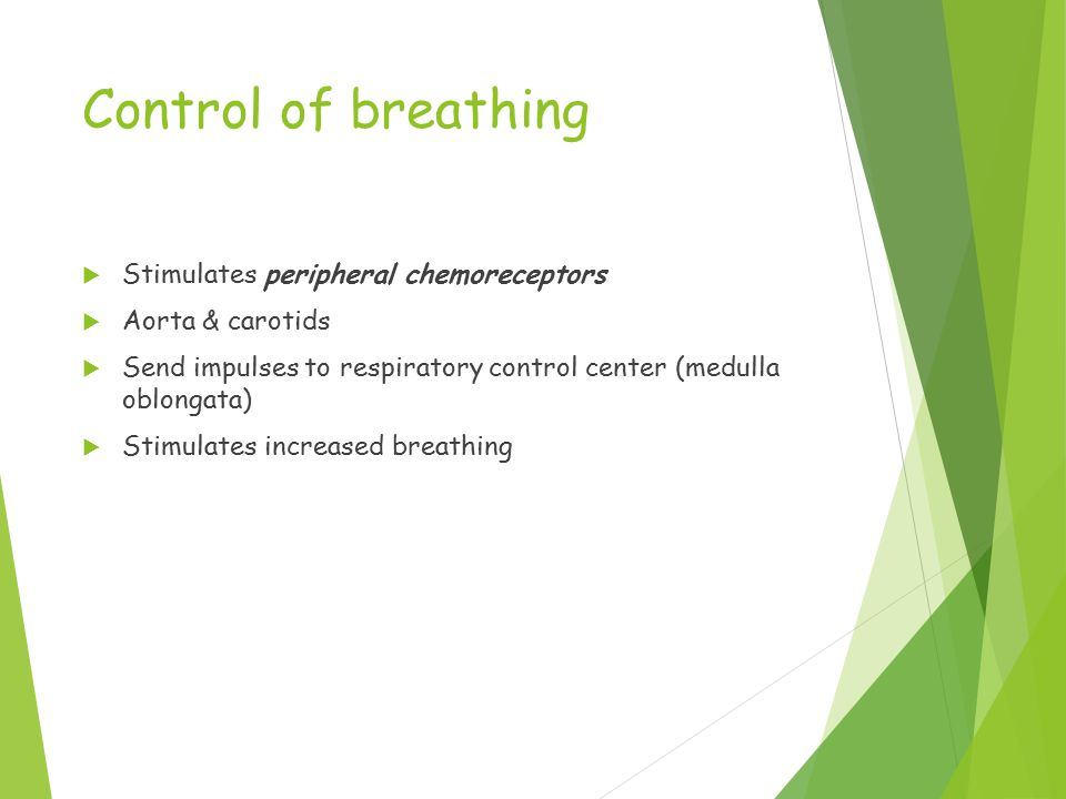 Control of breathing  Stimulates peripheral chemoreceptors  Aorta & carotids  Send impulses to respiratory control center (medulla oblongata)  Stimulates increased breathing