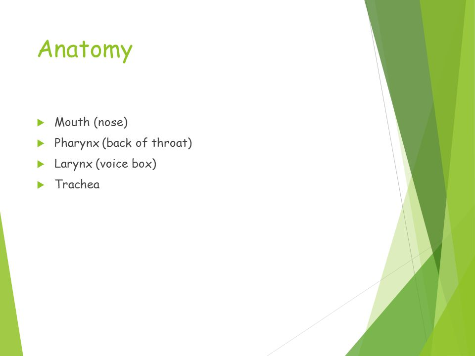 Anatomy  Mouth (nose)  Pharynx (back of throat)  Larynx (voice box)  Trachea