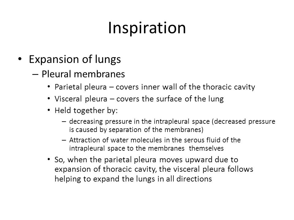 Inspiration Expansion of lungs – Pleural membranes Parietal pleura – covers inner wall of the thoracic cavity Visceral pleura – covers the surface of