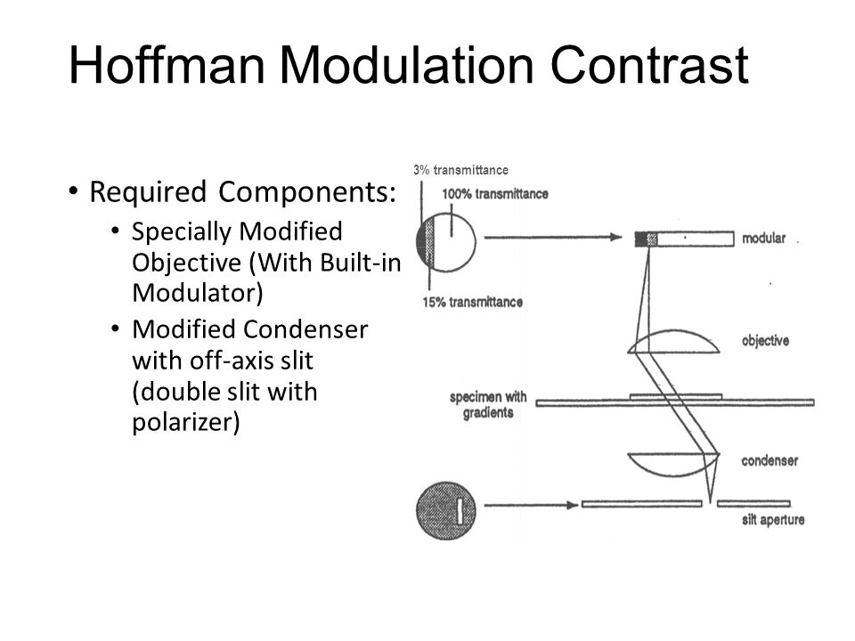 Hoffman Modulation Contrast Required Components: Specially Modified Objective (With Built-in Modulator) Modified Condenser with off-axis slit (double
