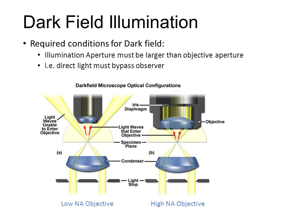 Dark Field Illumination Required conditions for Dark field: Illumination Aperture must be larger than objective aperture i.e. direct light must bypass