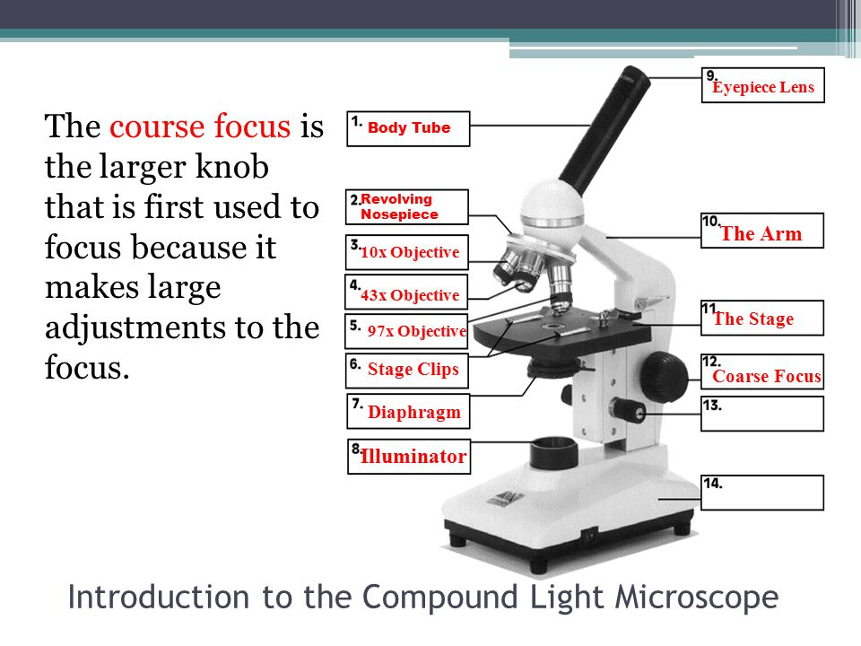 Introduction to the Compound Light Microscope The course focus is the larger knob that is first used to focus because it makes large adjustments to th