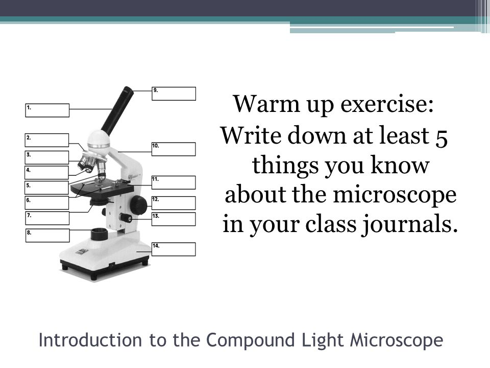 Introduction to the Compound Light Microscope Warm up exercise: Write down at least 5 things you know about the microscope in your class journals.