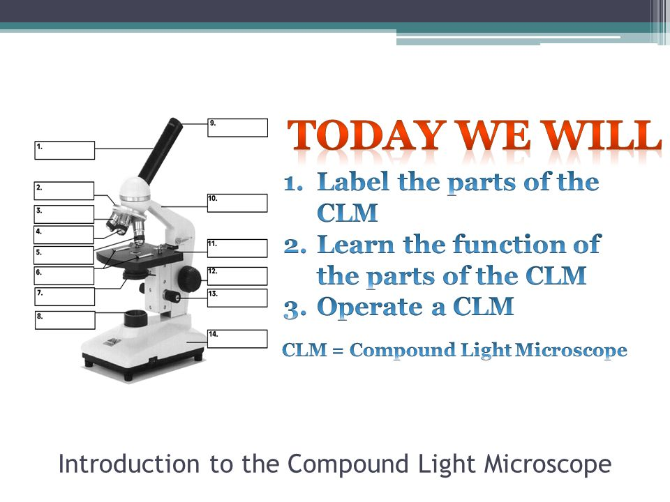 Introduction to the Compound Light Microscope