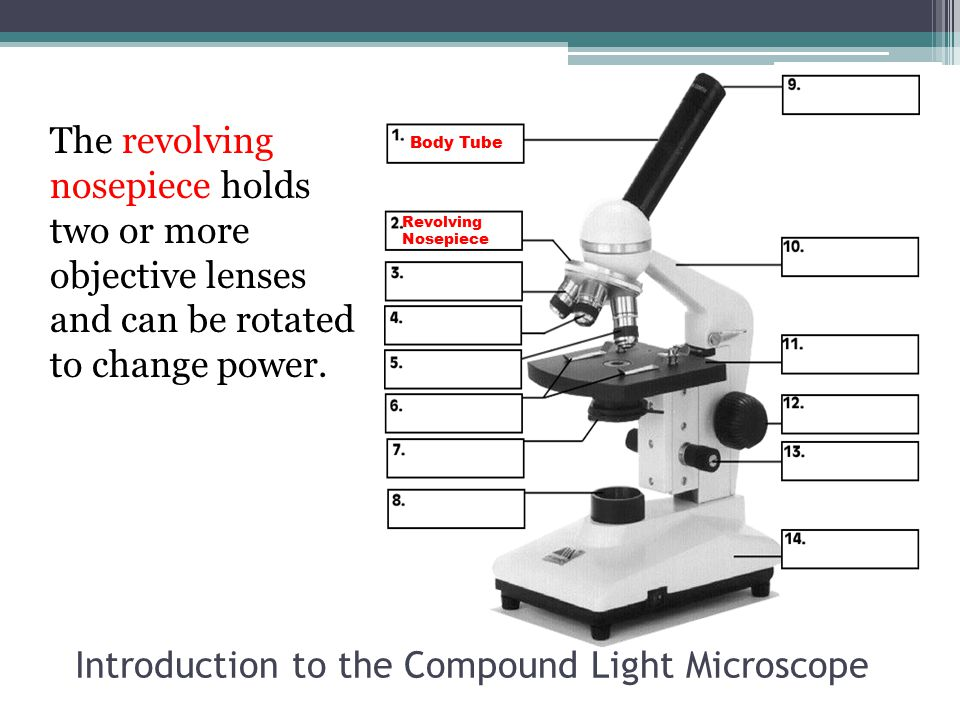 Introduction to the Compound Light Microscope The revolving nosepiece holds two or more objective lenses and can be rotated to change power. Body Tube