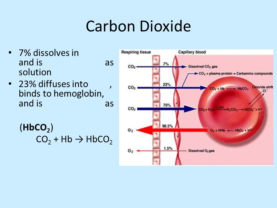 Carbon Dioxide 7% dissolves in and is as solution 23% diffuses into, binds to hemoglobin, and is as (HbCO 2 ) CO 2 + Hb → HbCO 2