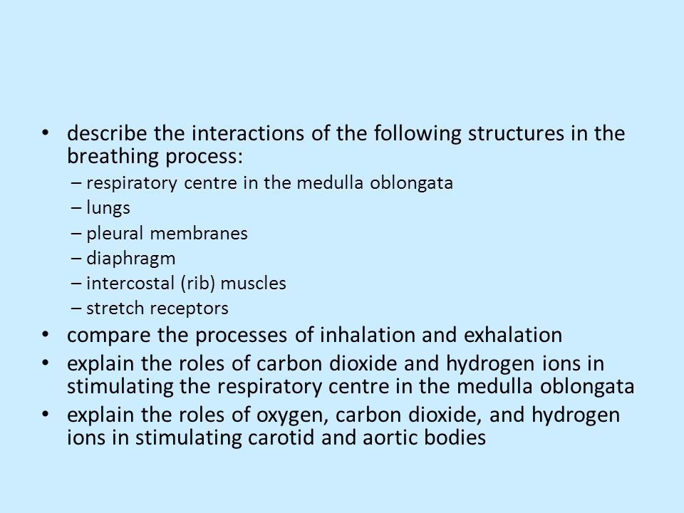 describe the interactions of the following structures in the breathing process: – respiratory centre in the medulla oblongata – lungs – pleural membra