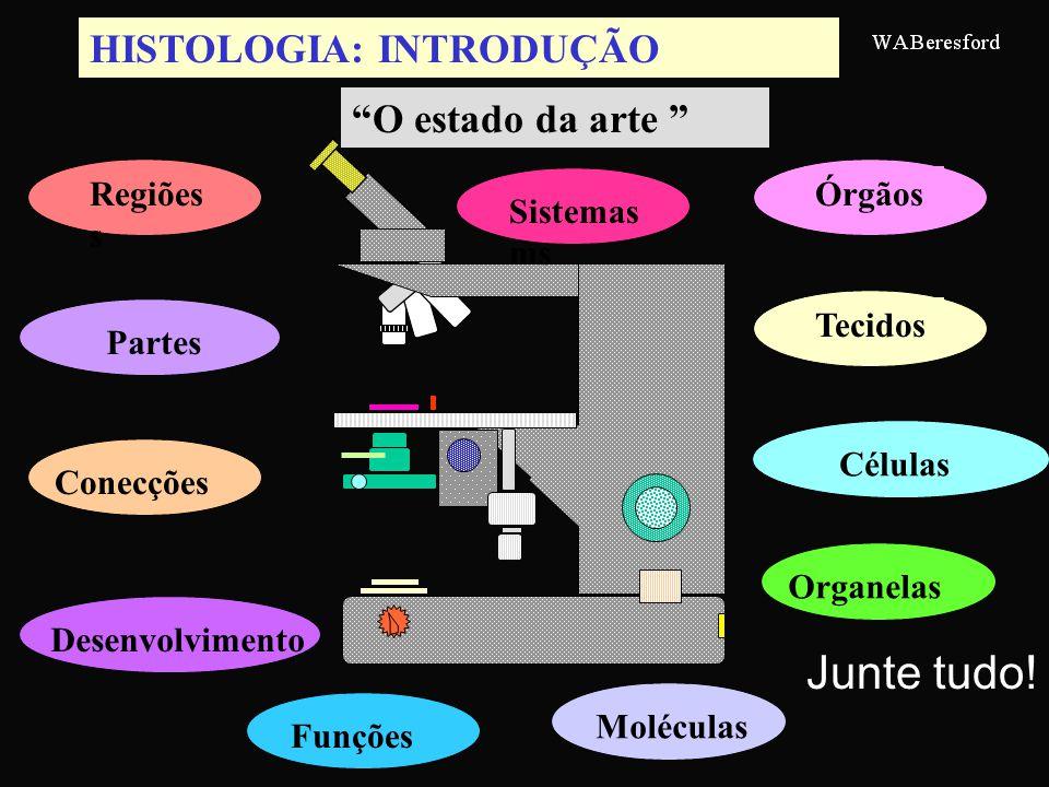 HISTOLOGIA: INTRODUÇÃO Regiões s Órgãos Moléculas Tecidos ConecçõesCélulasPartesOrganelasDesenvolvimentoFunçõesSistemas ms O estado da arte Junte tudo!