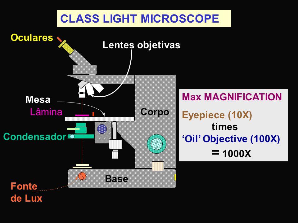CLASS LIGHT MICROSCOPE Max MAGNIFICATION Eyepiece (10X) times 'Oil' Objective (100X) = 1000X Base Oculares Mesa Lâmina Fonte de Lux Corpo Lentes objetivas Condensador