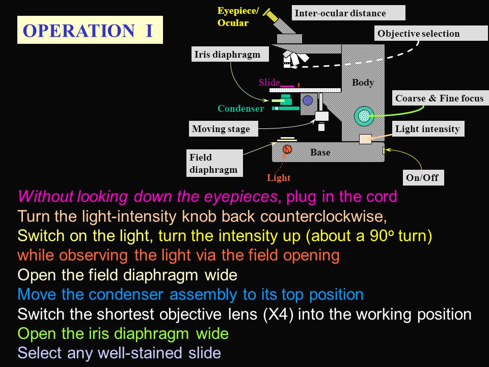 OPERATION I Base Condenser Eyepiece/ Ocular Slide Light Body Inter-ocular distance Moving stage Iris diaphragm Field diaphragm Coarse & Fine focus Light intensity On/Off Objective selection Without looking down the eyepieces, plug in the cord Turn the light-intensity knob back counterclockwise, Switch on the light, turn the intensity up (about a 90 o turn) while observing the light via the field opening Open the field diaphragm wide Move the condenser assembly to its top position Switch the shortest objective lens (X4) into the working position Open the iris diaphragm wide Select any well-stained slide