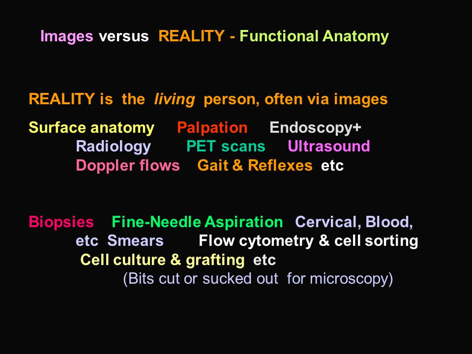 Images versus REALITY - Functional Anatomy REALITY is the living person, often via images Surface anatomy Palpation Endoscopy+ Radiology PET scans Ultrasound Doppler flows Gait & Reflexes etc Biopsies Fine-Needle Aspiration Cervical, Blood, etc Smears Flow cytometry & cell sorting Cell culture & grafting etc (Bits cut or sucked out for microscopy)