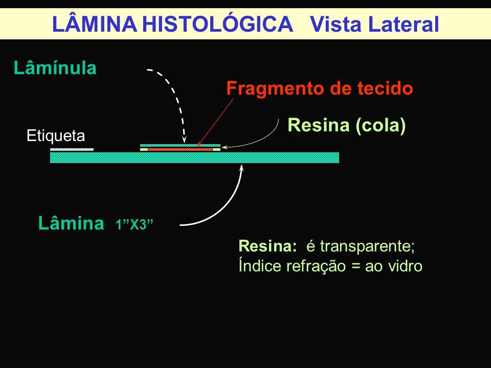 LÂMINA HISTOLÓGICA Vista Lateral Lâmínula Lâmina 1 X3 Fragmento de tecido Resina (cola) Resina: é transparente; Índice refração = ao vidro Etiqueta