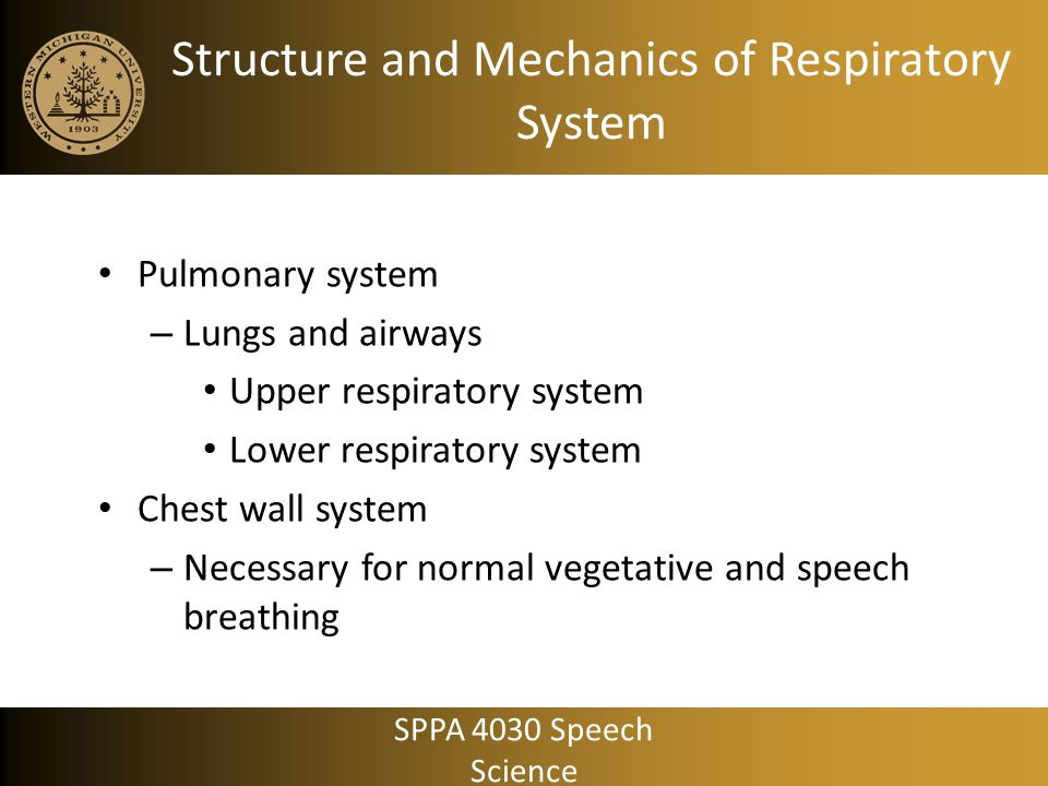Chest wall system Rib cage wall Abdominal wall Diaphragm Abdominal contents SPPA 4030 Speech Science