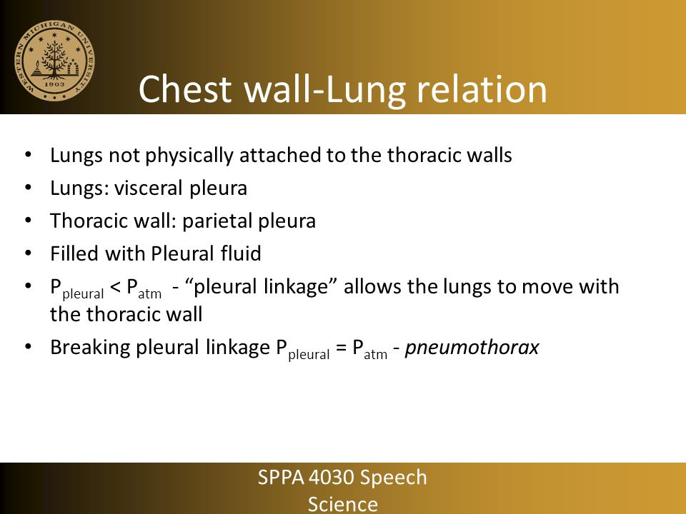 Respiratory demands of speech Conversational speech – Volume solution Constant tracheal pressure 8-10 cm H 2 0 – Pulsatile solution Brief increases above/below constant tracheal pressure Driving analogy – Volume solution Maintain a relatively constant speed – Pulsatile solution Brief increases/decreases in speed due to moment to moment traffic conditions SPPA 4030 Speech Science
