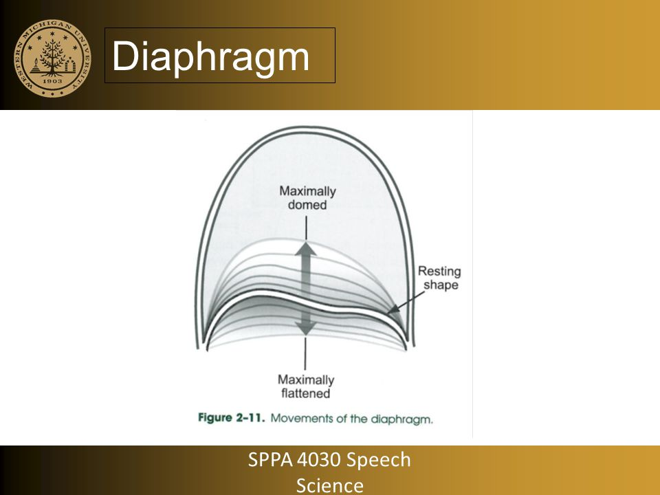 Output Variables: Volume Pneumotachograph – Sometimes called dry spirometry – Vented mask the covers mouth and nose – Airflow signal is then integrated to determine volume SPPA 4030 Speech Science
