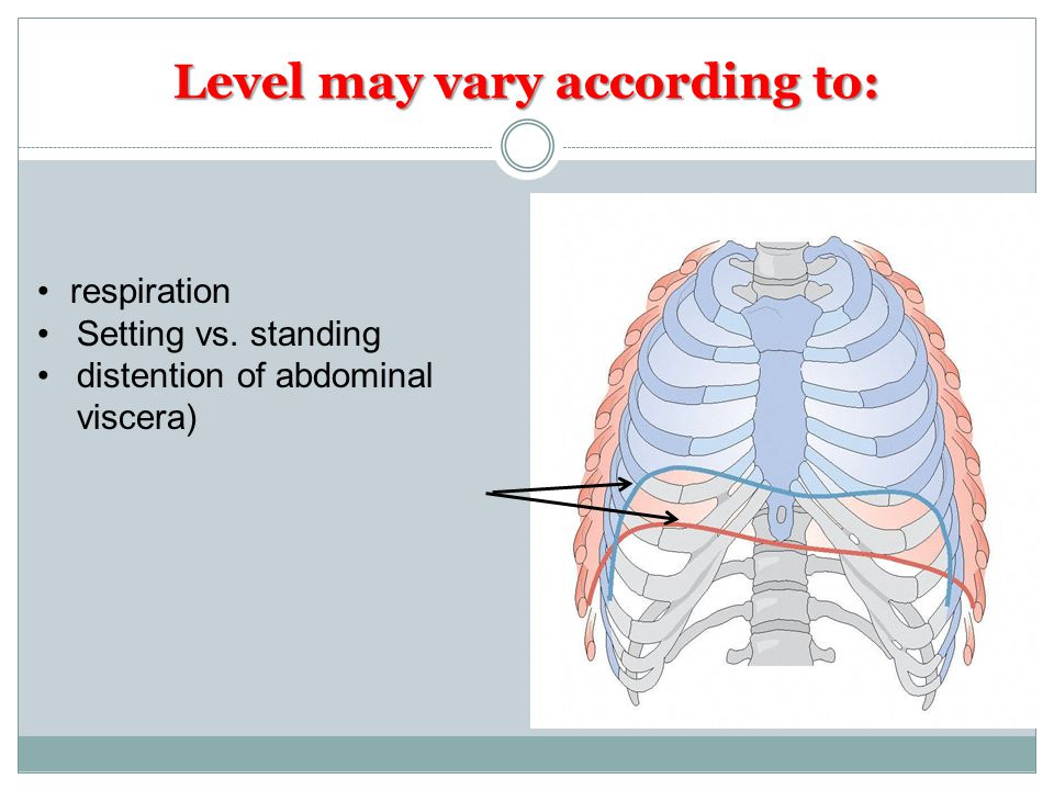 Level may vary according to: respiration Setting vs. standing distention of abdominal viscera)