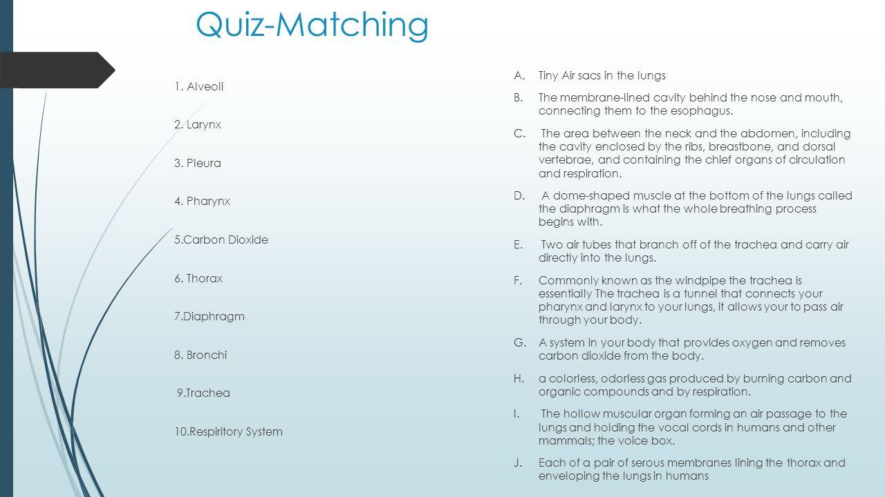 Quiz-Matching 1.Alveoli 2. Larynx 3. Pleura 4. Pharynx 5.Carbon Dioxide 6.