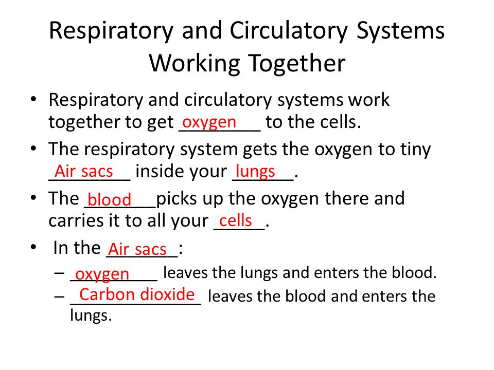 Respiratory and Circulatory Systems Working Together Respiratory and circulatory systems work together to get ________ to the cells. The respiratory s