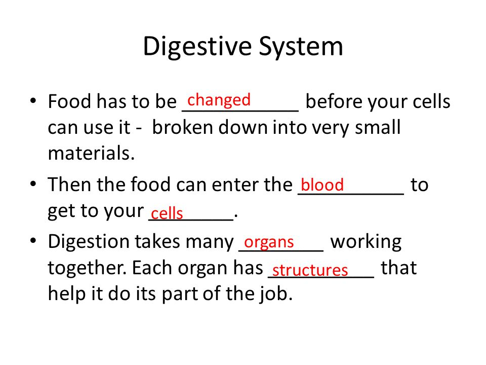 Digestive System Food has to be ___________ before your cells can use it - broken down into very small materials. Then the food can enter the ________