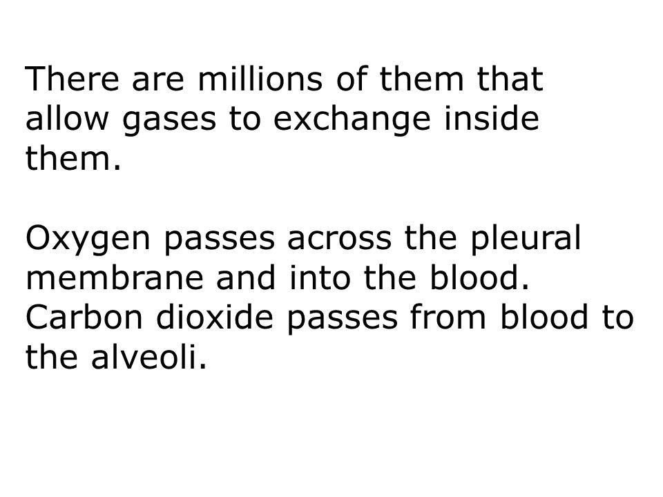 There are millions of them that allow gases to exchange inside them. Oxygen passes across the pleural membrane and into the blood. Carbon dioxide pass