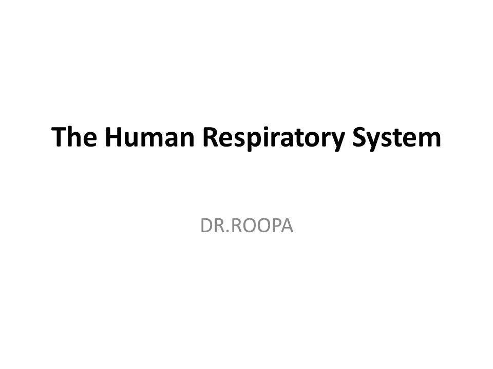 The Human Respiratory System DR.ROOPA