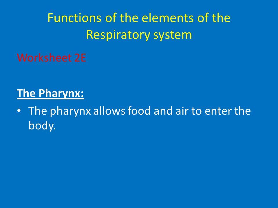 alveoli epiglottis larynx trachea bronchus mouth bronchioles diaphragm