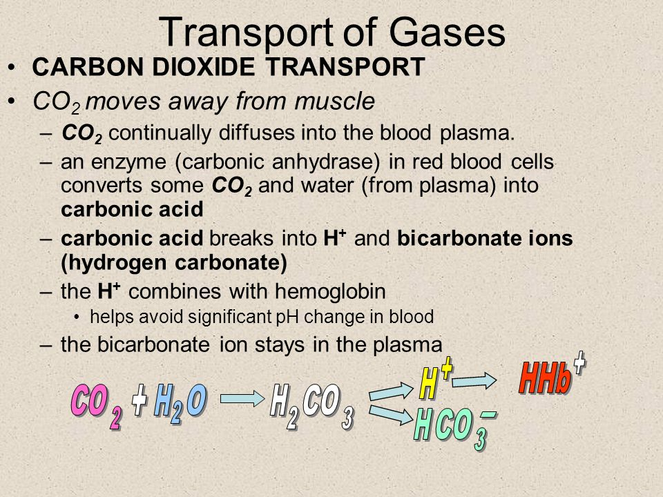Carbon Dioxide in the Blood Approximately –64% of CO 2 – bicarbonate ion in plasma –27% of CO 2 – combines with hemoglobin –9% of CO 2 – is dissolved in plasma
