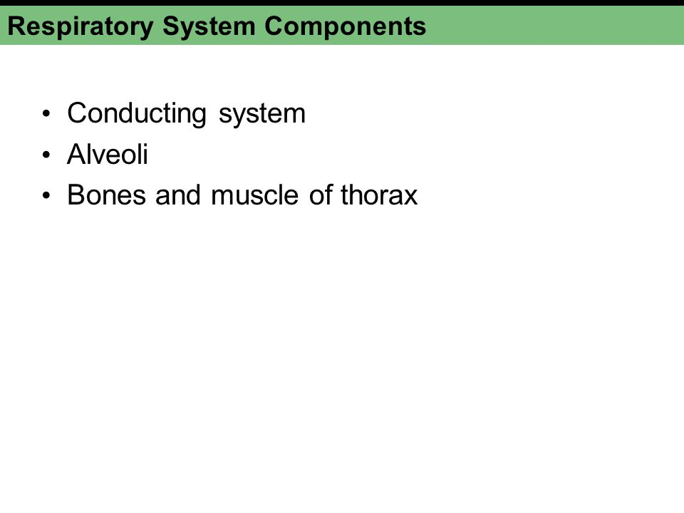 Respiratory System Figure 17-2a Right bronchus Left bronchus Left lung Diaphragm (a) The respiratory system Upper respiratory system Lower respiratory system Right lung Trachea Larynx Esophagus Vocal cords Pharynx Tongue Nasal cavity ANATOMY SUMMARY THE LUNGS AND THORACIC CAVITY