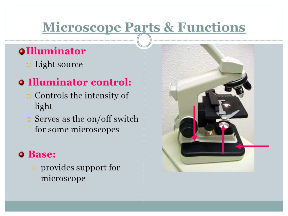 Microscope Parts & Functions Illuminator  Light source Illuminator control:  Controls the intensity of light  Serves as the on/off switch for some microscopes Base: o provides support for microscope