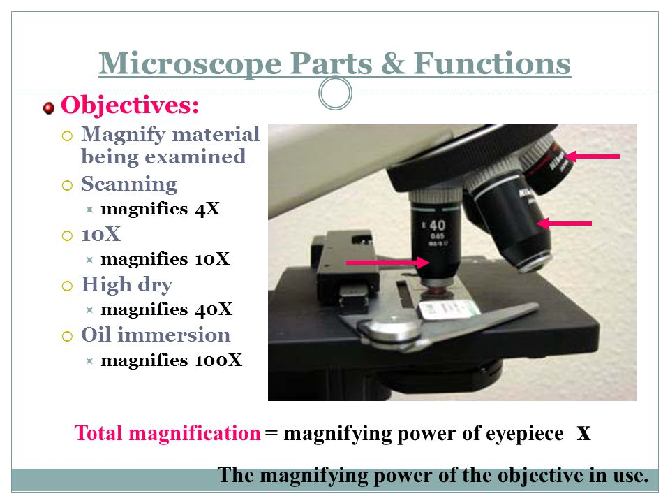 Microscope Parts & Functions Objectives:  Magnify material being examined  Scanning  magnifies 4X  10X  magnifies 10X  High dry  magnifies 40X  Oil immersion  magnifies 100X Total magnification = magnifying power of eyepiece x The magnifying power of the objective in use.