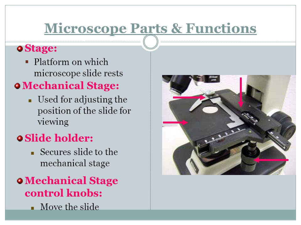 Microscope Parts & Functions Stage:  Platform on which microscope slide rests Mechanical Stage: Used for adjusting the position of the slide for viewing Slide holder: Secures slide to the mechanical stage Mechanical Stage control knobs: Move the slide