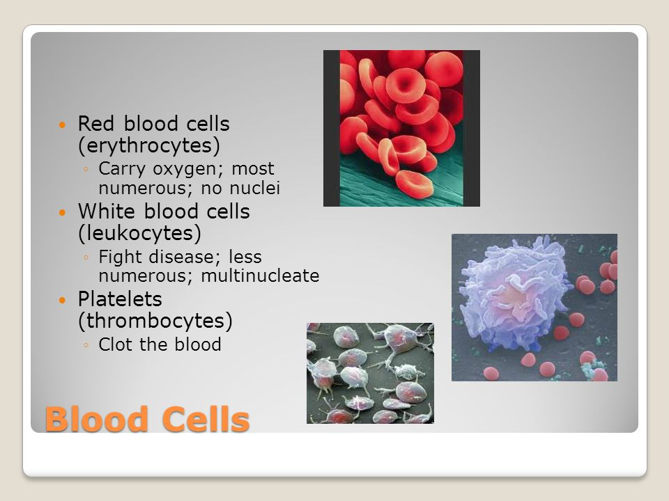 Blood Cells Red blood cells (erythrocytes) ◦Carry oxygen; most numerous; no nuclei White blood cells (leukocytes) ◦Fight disease; less numerous; multi