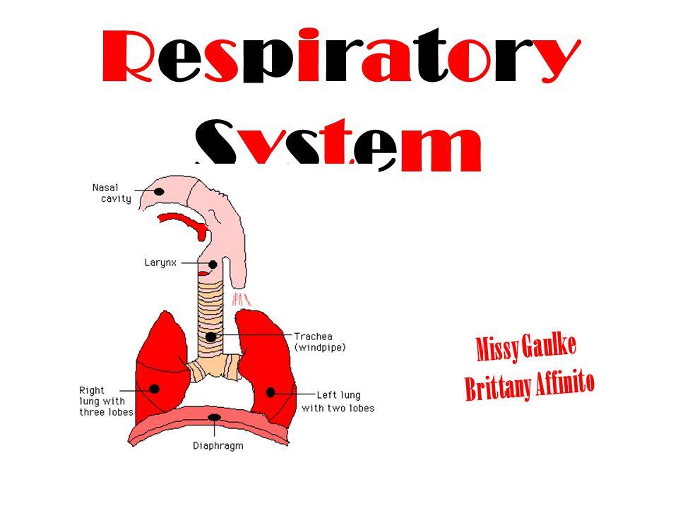 RespiratorySystemRespiratorySystem Missy Gaulke Brittany Affinito