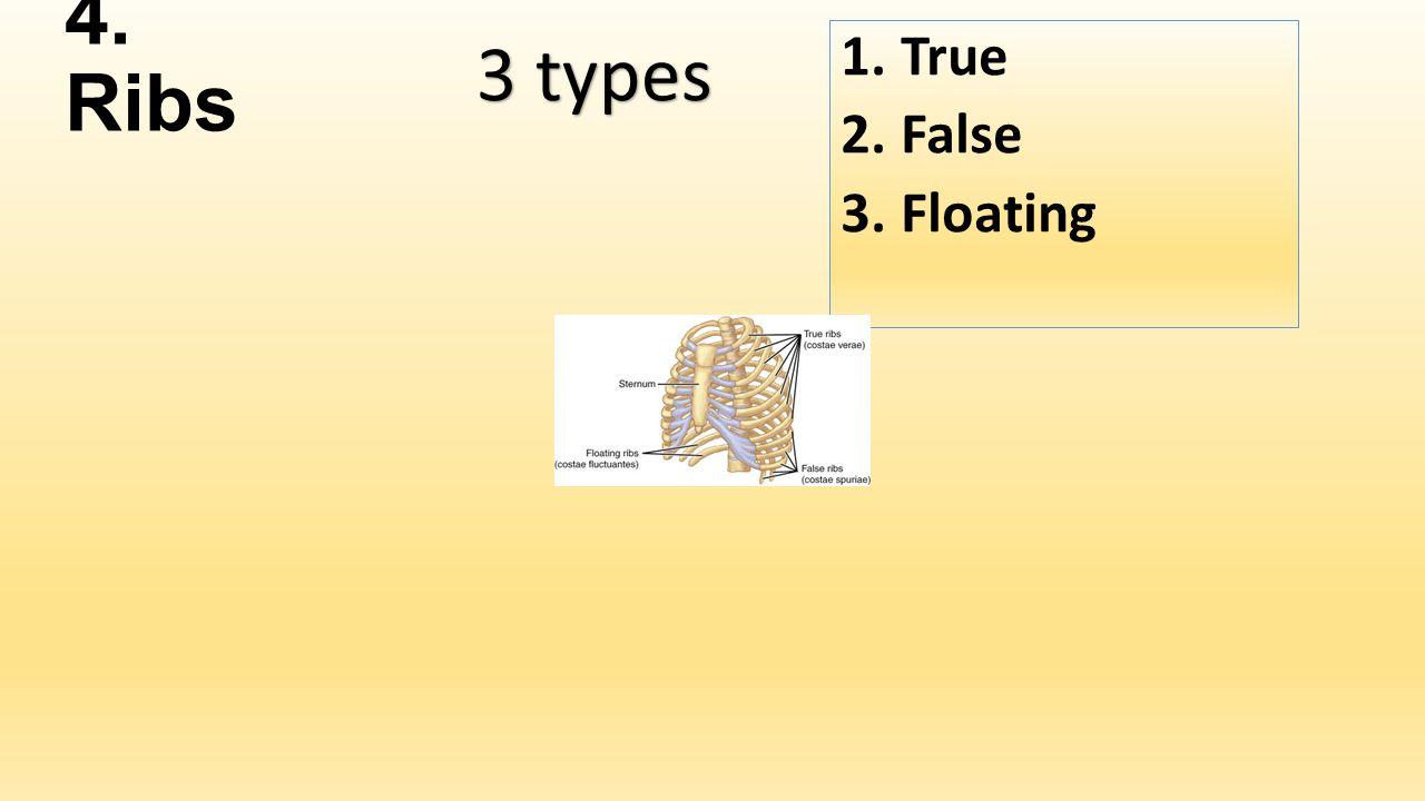 4. Ribs 1.True 2.False 3.Floating 3 types